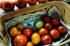 Langdon Clay_Horse Tomatoes