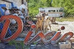 Lucinda Bunnen_Dixie Dogs